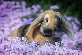 Spring Lesson: The Rigorous Bunny